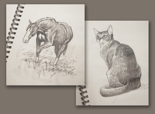 Sketches of a horse and cat