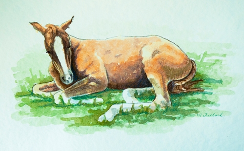Horse_Watercolour_sm